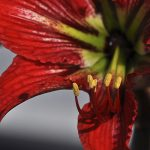 Serie FlowerPower